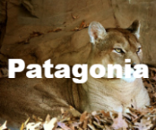 1patagonia