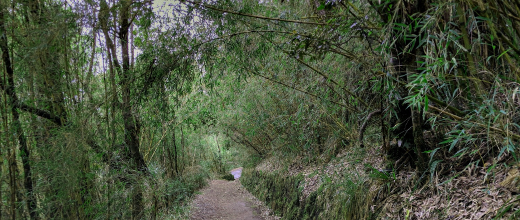 monumento natural cerro ñielol
