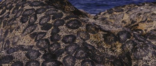 santuario granito orbicular