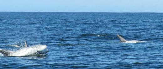 delfin calderon