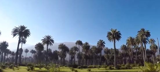 parque nacional palmas de cocalan